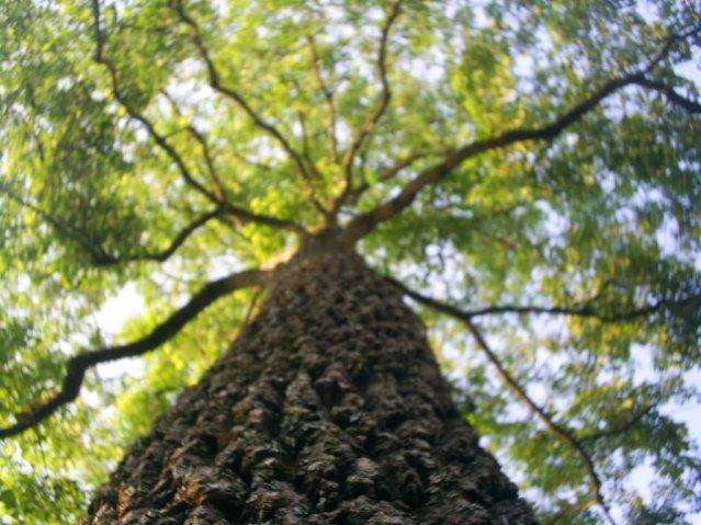 http://providencerbc.files.wordpress.com/2010/05/giant_tree.jpg